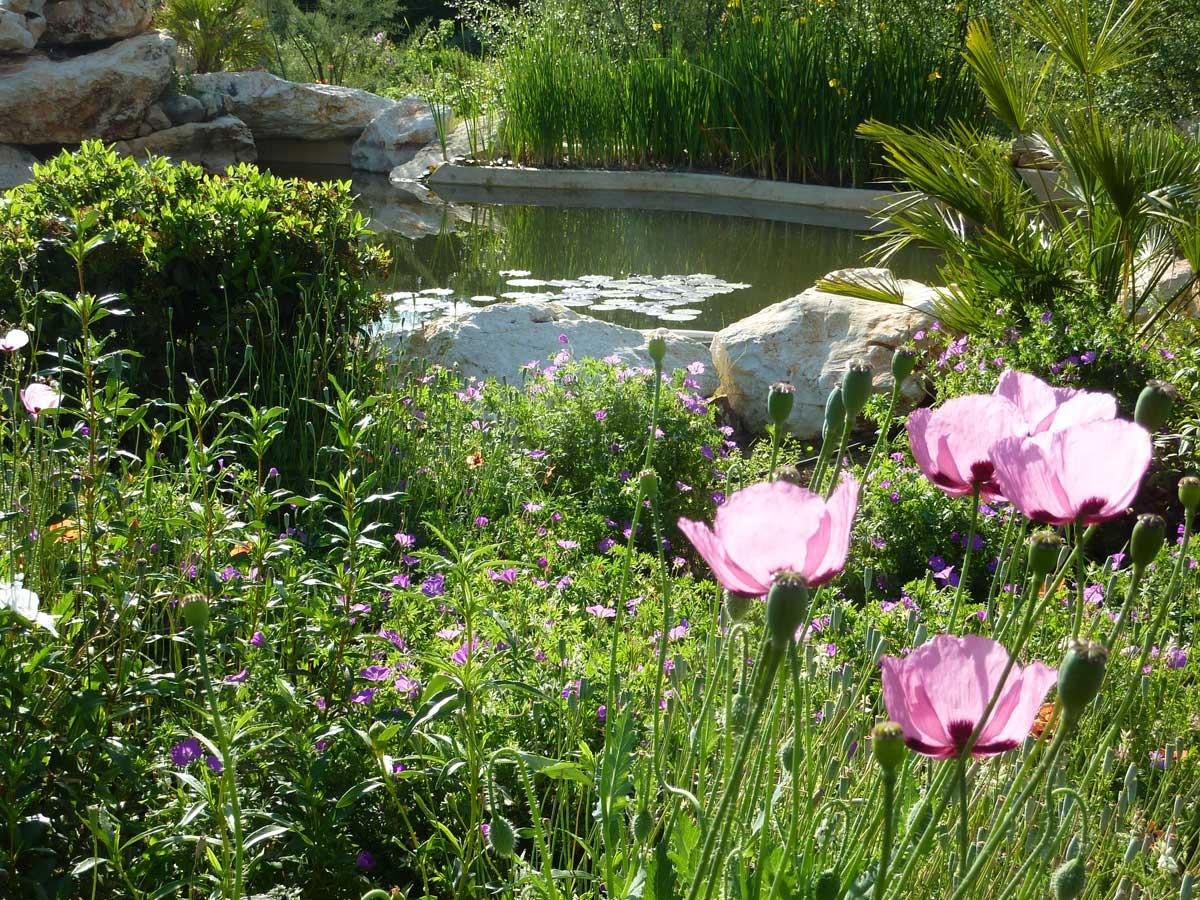 Ventajas del jard n aut ctono jard n sostenible for Plantas jardin mediterraneo