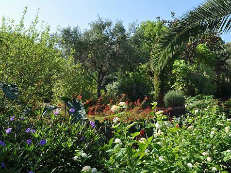 Jardín subtropical en Jávea (Alicante)