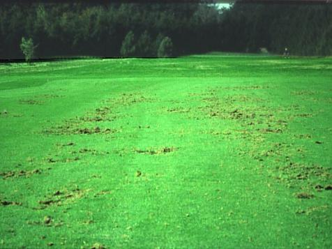 TURF PESTS: ARMY WORMS CUT WORMS