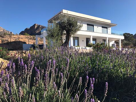 Plantas autóctonas en tierra semi desértica en Bussot (Alicante)