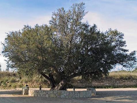 Monumentale bomen