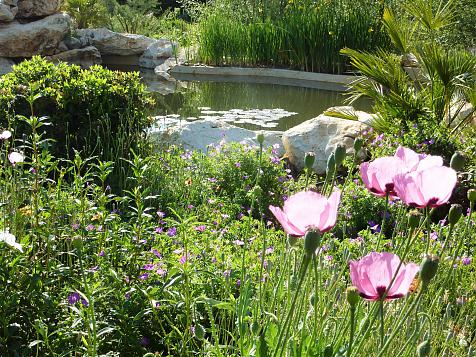 Natural pond and pool in Pedreguer (Alicante)